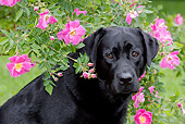 DOG 18 LS0034 01