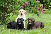 DOG 18 LS0041 01