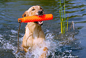 DOG 18 LS0045 01