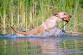 DOG 18 LS0046 01