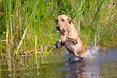 DOG 18 LS0047 01