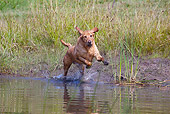 DOG 18 LS0049 01