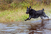 DOG 18 LS0053 01