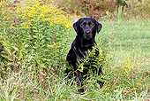 DOG 18 LS0057 01