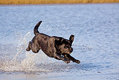 DOG 18 LS0059 01