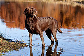 DOG 18 LS0063 01
