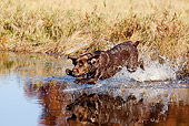 DOG 18 LS0064 01