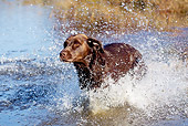 DOG 18 LS0065 01