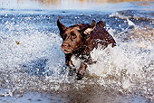 DOG 18 LS0066 01