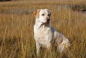 DOG 18 LS0069 01