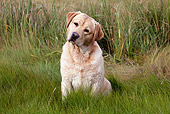 DOG 18 LS0071 01