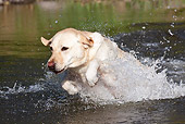 DOG 18 LS0072 01