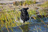 DOG 18 LS0081 01