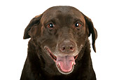 DOG 18 MR0001 01