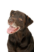 DOG 18 MR0010 01