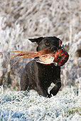 DOG 18 NR0047 01