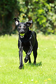 DOG 18 NR0048 01