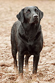 DOG 18 NR0050 01