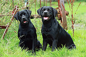 DOG 18 NR0054 01
