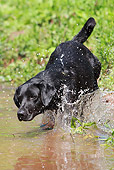 DOG 18 NR0056 01