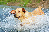 DOG 18 NR0058 01