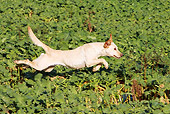 DOG 18 NR0061 01