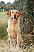 DOG 18 NR0062 01