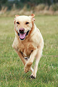 DOG 18 NR0063 01