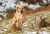 DOG 18 NR0064 01