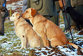 DOG 18 NR0065 01