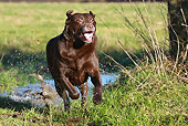 DOG 18 NR0069 01