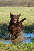 DOG 18 NR0070 01