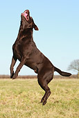 DOG 18 NR0089 01