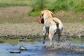 DOG 18 NR0095 01