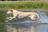 DOG 18 NR0096 01