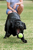 DOG 18 NR0097 01