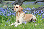 DOG 18 NR0099 01