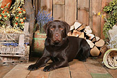 DOG 18 NR0100 01