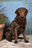 DOG 18 NR0102 01