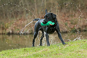 DOG 18 NR0104 01