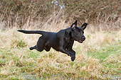 DOG 18 NR0111 01