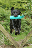 DOG 18 NR0113 01