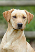 DOG 18 NR0115 01