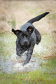 DOG 18 NR0119 01