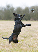 DOG 18 NR0121 01