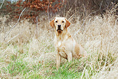 DOG 18 NR0122 01
