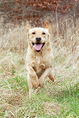 DOG 18 NR0123 01