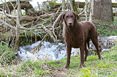 DOG 18 NR0125 01