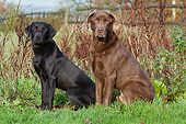 DOG 18 NR0133 01