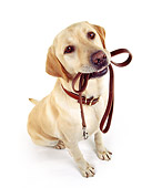 DOG 18 RK0010 19
